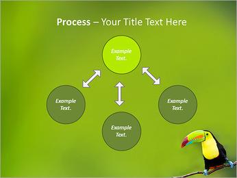 Toucan Bird PowerPoint Template - Slide 71