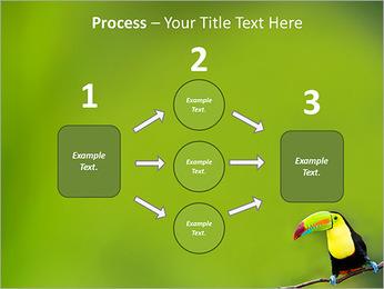 Toucan Bird PowerPoint Template - Slide 72