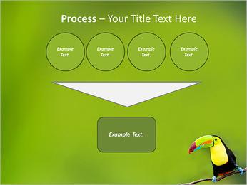 Toucan Bird PowerPoint Template - Slide 73