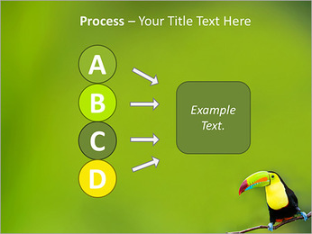 Toucan Bird PowerPoint Template - Slide 74