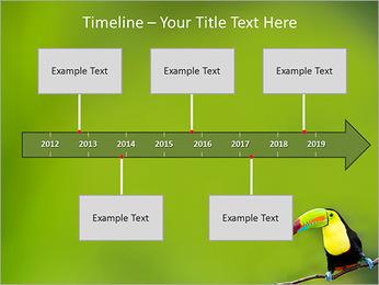 Toucan Bird PowerPoint Template - Slide 8