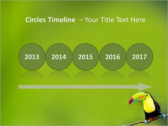 Toucan Bird PowerPoint Template - Slide 9