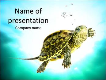 Small Tortilla PowerPoint Template