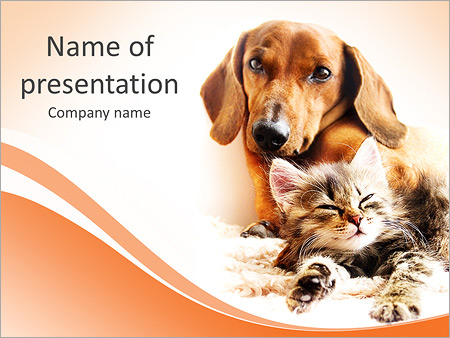 cat powerpoint templates