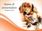 Dutchshund mit Katze PowerPoint-Vorlagen