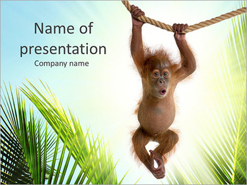 Small Gorilla PowerPoint Template