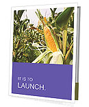 Rich Corn Harvest Presentation Folder
