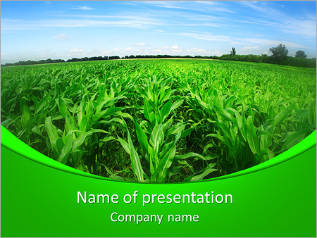 Corn in field powerpoint template backgrounds id 0000005566 corn in field powerpoint templates toneelgroepblik Gallery