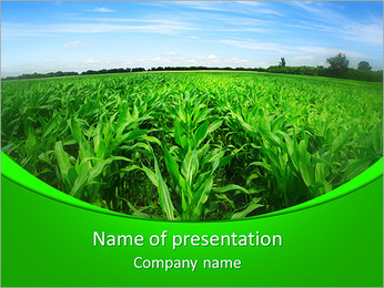 Maïs dans le domaine Modèles des présentations  PowerPoint
