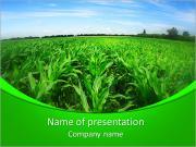 Alanında mısır PowerPoint sunum şablonları