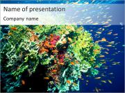 Diving PowerPoint Templates
