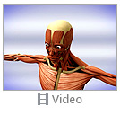 Human Anatomy Video