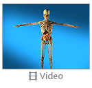 Skeleton Video