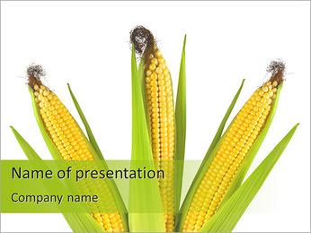 Maïs Modèles des présentations  PowerPoint