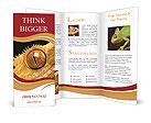 0000054243 Brochure Templates