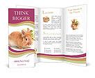 0000059704 Brochure Templates