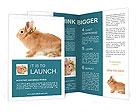 0000059706 Brochure Templates