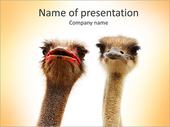 Two Ostriches PowerPoint Template