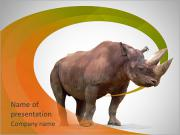 Rhinoceros PowerPoint Templates