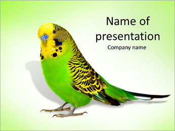 Green Parrot PowerPoint Template