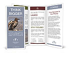 Grey Bird Brochure Templates