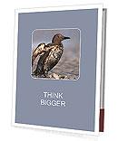 Grey Bird Presentation Folder