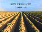 Harvest Season PowerPoint Templates