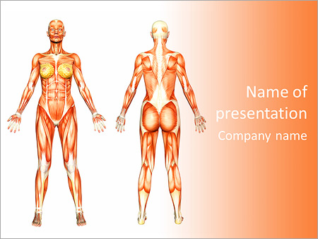 muscle system powerpoint template backgrounds google slides id