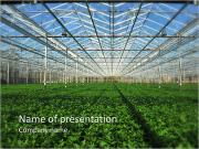 Organic Orchard PowerPoint Templates