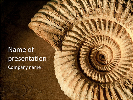 Beautiful shell powerpoint template backgrounds id 0000006895 beautiful shell powerpoint template toneelgroepblik Image collections