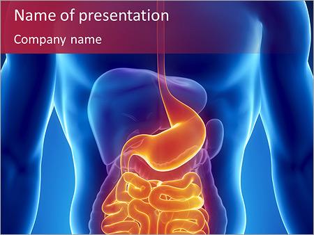 Système digestif Modèles des présentations  PowerPoint