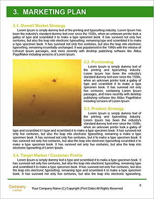 0000060266 Word Template - Page 8