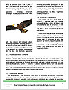 0000060456 Word Templates - Page 4