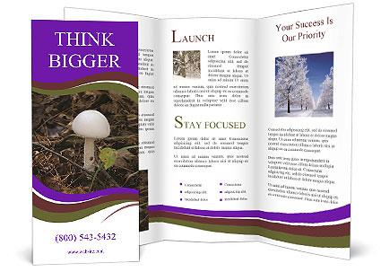 0000060482 Brochure Template