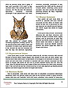 0000060504 Word Template - Page 4