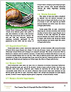0000060558 Word Templates - Page 4
