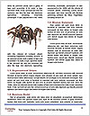 0000060636 Word Template - Page 4