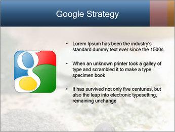0000060646 PowerPoint Templates - Slide 10