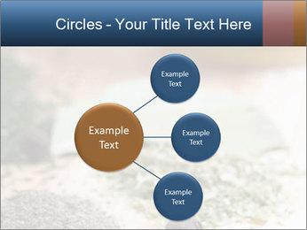 0000060646 PowerPoint Templates - Slide 79