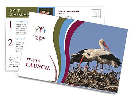 0000060688 Postcard Templates