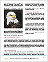 0000060767 Word Template - Page 4
