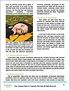 0000060892 Word Template - Page 4