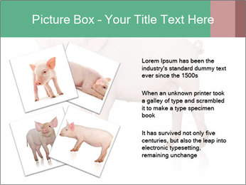 0000060952 PowerPoint Template - Slide 23