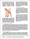 0000060952 Word Template - Page 4