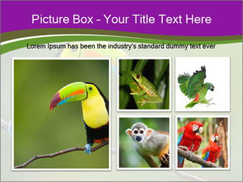 0000061041 PowerPoint Templates - Slide 19