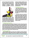 0000061080 Word Template - Page 4