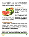0000061082 Word Template - Page 4