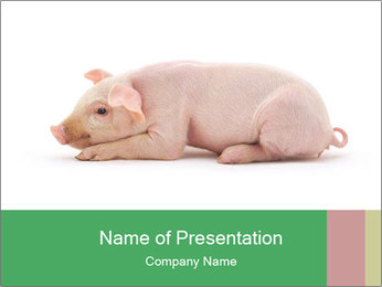 0000061112 PowerPoint Template - Slide 1