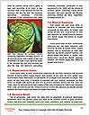 0000061140 Word Template - Page 4