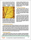 0000061154 Word Template - Page 4